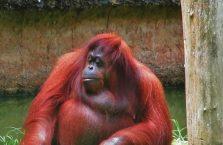 Lok Kawi Wildlife Park Borneo (17)