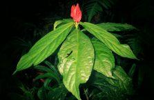 Lok Kawi Wildlife Park Borneo (20)