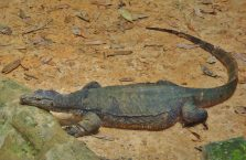Lok Kawi Wildlife Park Borneo (23)