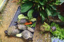 Lok Kawi Wildlife Park Borneo (24)