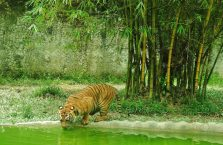 Lok Kawi Wildlife Park Borneo (6)