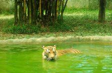 Lok Kawi Wildlife Park Borneo (7)