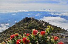 Mount Kinabalu Borneo (32)