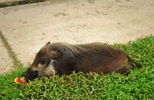 Park Narodowy Bako - Borneo (10)