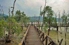 Park Narodowy Bako - Borneo (12)