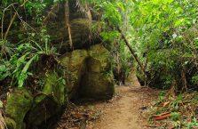 Park Narodowy Bako - Borneo (13)
