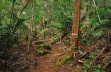 Park Narodowy Bako - Borneo (17)