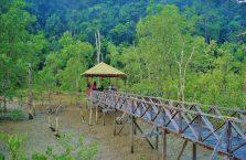 Park Narodowy Bako - Borneo (18)