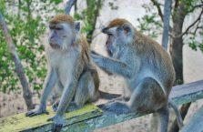 Park Narodowy Bako - Borneo (19)