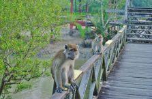 Park Narodowy Bako - Borneo (20)