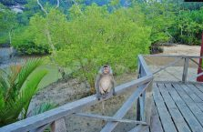 Park Narodowy Bako - Borneo (21)