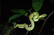 Park Narodowy Bako - Borneo (22)