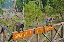 Park Narodowy Bako - Borneo (27)