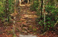 Park Narodowy Bako - Borneo (28)