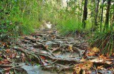 Park Narodowy Bako - Borneo (29)