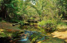 Park Narodowy Bako - Borneo (30)