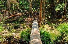 Park Narodowy Bako - Borneo (31)