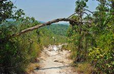 Park Narodowy Bako - Borneo (35)