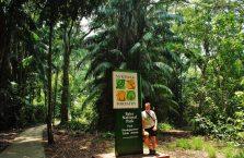 Park Narodowy Bako - Borneo (38)