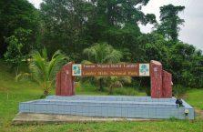 Park Narodowy Lambir Hills (1)