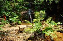 Park Narodowy Lambir Hills (11)