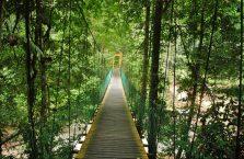 Park Narodowy Lambir Hills (2)