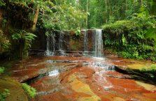 Park Narodowy Lambir Hills (3)