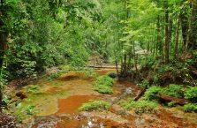 Park Narodowy Lambir Hills (5)