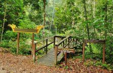 Park Narodowy Lambir Hills (8)