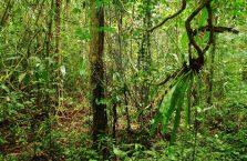 Park Narodowy Mulu Borneo (10)
