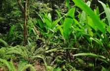 Park Narodowy Mulu Borneo (11)