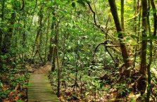 Park Narodowy Mulu Borneo (12)