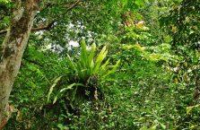 Park Narodowy Mulu Borneo (13)