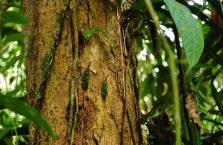 Park Narodowy Mulu Borneo (16)