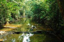 Park Narodowy Mulu Borneo (17)