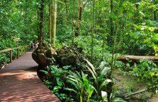 Park Narodowy Mulu Borneo (18)
