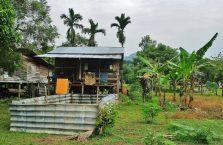 Park Narodowy Mulu Borneo (28)