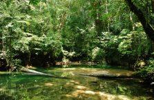 Park Narodowy Mulu Borneo (35)