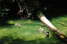 Park Narodowy Mulu Borneo (41)