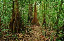 Park Narodowy Mulu Borneo (44)