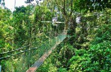 Park Narodowy Mulu Borneo (50)