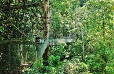 Park Narodowy Mulu Borneo (52)