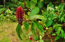 Park Narodowy Mulu Borneo (9)