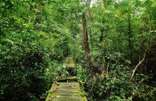 Park Narodowy Niah Borneo (13)