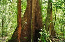 Park Narodowy Niah Borneo (18)
