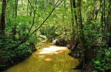 Park Narodowy Niah Borneo (19)