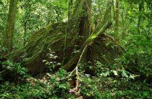 Park Narodowy Niah Borneo (20)
