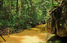 Park Narodowy Niah Borneo (21)