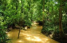Park Narodowy Niah Borneo (22)
