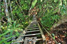 Park Narodowy Niah Borneo (26)